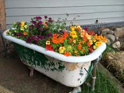 crested butte flowers in tub