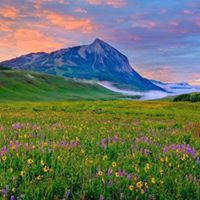 crested butte flowers